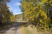 Gravel road surrounded by colorful rowan trees in sunny autumn.