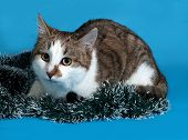 White And Gray Cat In Christmas Decorations Lying On Blue