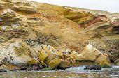 Islas Ballestas, Peru - pelicans colony