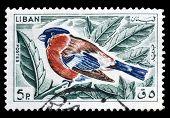 Lebanon 1965 Bullfinch