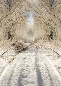Winter road in snowy forest landscape
