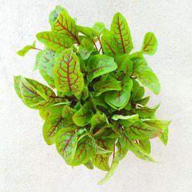 pic of sorrel  - Fresh green salad leaves - JPG