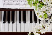foto of black-cherry  - branches with white flowers of cherry and green leaves lie on the piano keyboard  - JPG