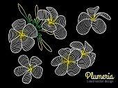 stock photo of plumeria flower  - Abstract vector art lined design  - JPG