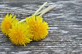 image of eukaryote  - Yellow dandelion flowers on a wooden background - JPG