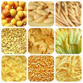 picture of maize  - Vegetarian food collage - JPG
