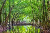 pic of jungle  - Forest - JPG