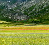 stock photo of plateau  - Piano Grande di Castelluccio  - JPG