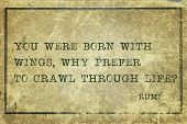 image of crawl  - You were born with wings why prefer to crawl  - JPG