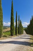 picture of row trees  - Cypress Trees rows and a white road rural landscape in Montalcino land near Siena Tuscany Italy Europe - JPG
