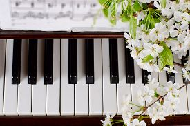 pic of black-cherry  - branches with white flowers of cherry and green leaves lie on the piano keyboard  - JPG