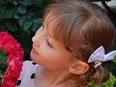 Постер, плакат: A girl looks at a rose bush