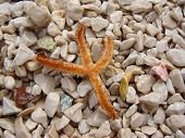 Starfish Lying Over Multicolour Shingle Cover