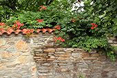old stone wall with flowers