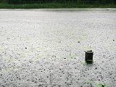 Lake Under Rain