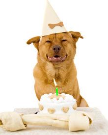 picture of happy birthday  - Dog Happy Birthday party on white background - JPG