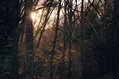 Sunset In Forest Nature Background. Dark Background Of Forest.last Sun In Forest Nature. Sun Rays Th poster