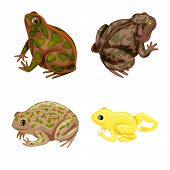 Isolated Object Of Frog And Anuran Symbol. Set Of Frog And Animal Stock Vector Illustration. poster