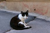 Stray  Tuxedo Cat Outdoors. Animals, Pets, Animals Day Concept.  Cat On The Street. poster