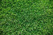 Close up shot of fresh spring green grass.