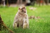 Portrait Of A Monkey In The Park. Wild Monkey Family At Sacred Monkey Forest. Monkeys Live In A Wild poster