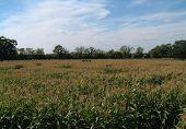 Field 14
