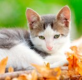 Domestic cat in the garden poster