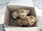 Two Stray Puppy In A Cardboard Box poster