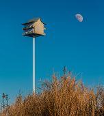 Birdhouse on a sand dune