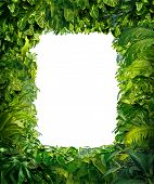 stock photo of jungle exotic  - Jungle border blank frame with rich tropical green plants as ferns and palm tree leaves found in southern hot climates as south America Hawaii and Asia with framed white isolated copy space center - JPG
