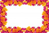 Yellow And Pink Roses  Flowers Blossom Frame