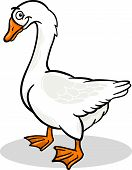 Goose Farm Bird Animal Cartoon Illustration