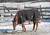 Cavalo de Inverno