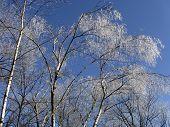 Ice Storm - Winter 2008/9