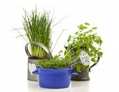 Chives planted in watering can, garden cress in casserole, lemon balm in pewter jug on white backgro