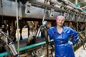 Positive dairymaid at automatic milking system industry cow farm