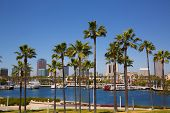 foto of marina  - Long Beach California skyline with palm trees from marina port USA - JPG