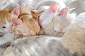 Baby Kittens Sleeping With Their Mother