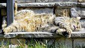 Cat Lying On Steps