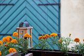 Marigolds growing in planter box, Tallinn, Estonia