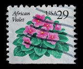 Usa Postage Stamp Shows Flower African Violet (saintpaulias)
