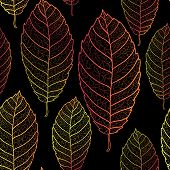 Autumn transparent leaves seamless pattern. Dark background.Colored art vector autumn leaves pattern