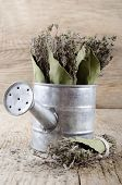 stock photo of covenant  - dried thyme covenant and bay leaf in a watering can - JPG