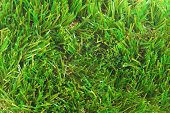 artificial grass astroturf  background