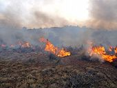 picture of sagebrush  - Wildland fire fighters use prescribed fire to manage rangeland vegetation - JPG