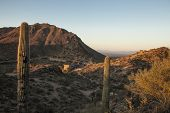 sonoran desert at dawn with mountains and road