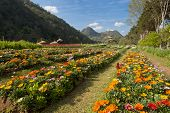 Beautiful garden scene in Chiang Mai Thailand