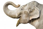 image of gentle giant  - head of elephant - JPG
