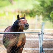 Horse touching a electric fences.