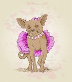 Small Dog  In Pink Dress